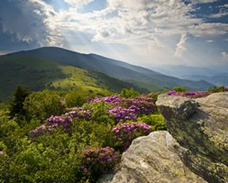 Scenic view over a mountain and flowers