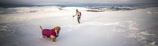 Person and dog walking on snow